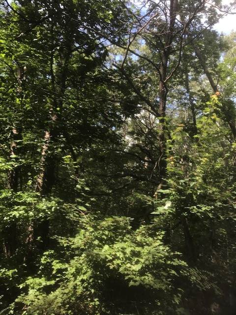 27 Eagle Point Drive, Monteagle, TN 37356 (MLS #RTC2181497) :: Kimberly Harris Homes
