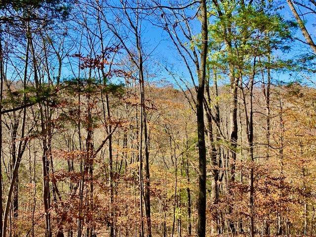 57 Triple B Ln, Taft, TN 38488 (MLS #RTC2207088) :: Maples Realty and Auction Co.