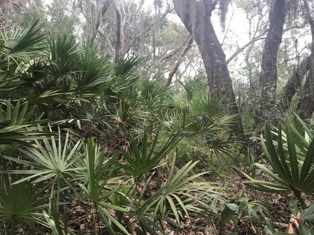 Lot 1 Robert Oliver Avenue, Fernandina Beach, FL 32034 (MLS #93966) :: Berkshire Hathaway HomeServices Chaplin Williams Realty