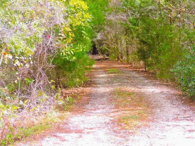 15447 W Younis West Road, Jacksonville, FL 32218 (MLS #87999) :: Berkshire Hathaway HomeServices Chaplin Williams Realty