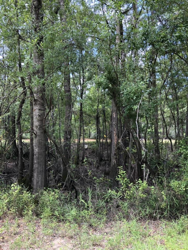 5 Beaver Trail - Photo 1