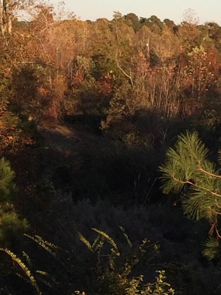 000 Queens Creek Road - Photo 1