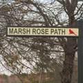 765 Marsh Rose Path - Photo 4