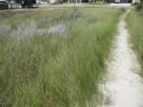 5223 Beach Drive - Photo 3