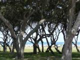 1008 Ocean View Estates - Photo 13