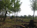 245 Mimosa Drive - Photo 2