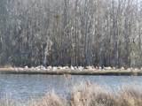 141 Lake Tabor Drive - Photo 7