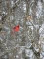 5108 Trent Woods Drive - Photo 158