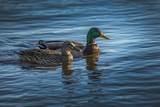 104 Lakeside Green Drive - Photo 26