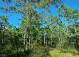 168 Acres Off Old Georgetown Rd - Photo 6