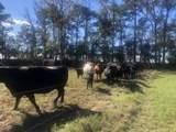 813 Butler Farm Road - Photo 7