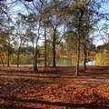 79 Plantation Passage Drive - Photo 4