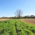 4803 Andrew Jackson Highway - Photo 17