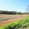4803 Andrew Jackson Highway - Photo 18
