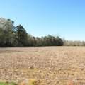 4803 Andrew Jackson Highway - Photo 26