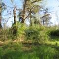 4803 Andrew Jackson Highway - Photo 33