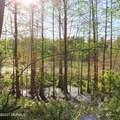 4803 Andrew Jackson Highway - Photo 39