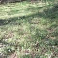 4803 Andrew Jackson Highway - Photo 42