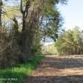 4803 Andrew Jackson Highway - Photo 43