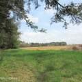 4803 Andrew Jackson Highway - Photo 5