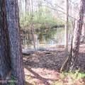 4803 Andrew Jackson Highway - Photo 53