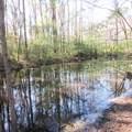 4803 Andrew Jackson Highway - Photo 55