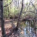 4803 Andrew Jackson Highway - Photo 56