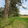 4803 Andrew Jackson Highway - Photo 6