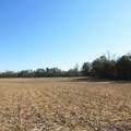 4803 Andrew Jackson Highway - Photo 63