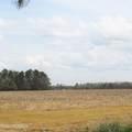 4803 Andrew Jackson Highway - Photo 7