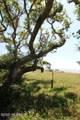 1494 Island Road - Photo 8