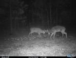 34.87 Acre Nc Hwy 53 - Photo 4