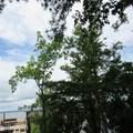 111 White Oak Street - Photo 8