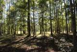 4551 Moss Bend - Photo 12