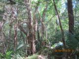 11 Sabal Palm Trail - Photo 2
