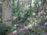 11 Sabal Palm Trail - Photo 3