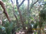 11 Sabal Palm Trail - Photo 5