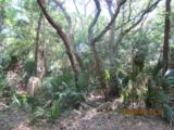 11 Sabal Palm Trail - Photo 6