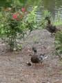 1333 Grandiflora Drive - Photo 35