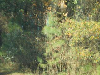 1620 Blacksmith Circle, Kinston, NC 28504 (MLS #100038959) :: Century 21 Sweyer & Associates