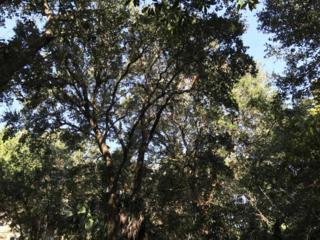 619 Currituck Way, Bald Head Island, NC 28461 (MLS #100040430) :: Century 21 Sweyer & Associates