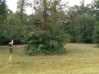 163 Old Beechtree Lane, Jacksonville, NC 28540 (MLS #80159439) :: Century 21 Sweyer & Associates