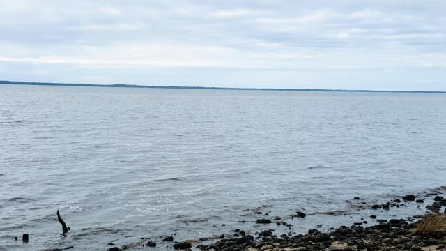 540 S Brightleaf Drive, Arapahoe, NC 28510 (MLS #100147557) :: Coldwell Banker Sea Coast Advantage