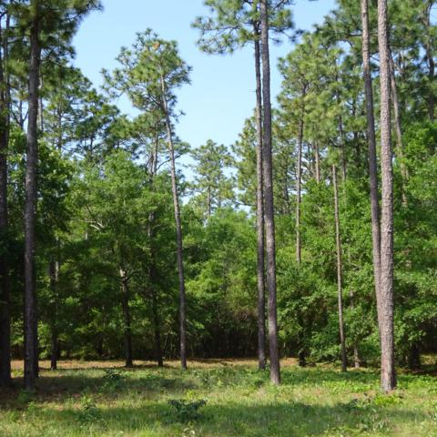 Lot 7 Navigator Way, Southport, NC 28461 (MLS #100166230) :: The Keith Beatty Team