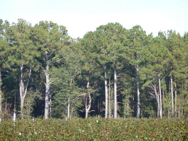48 Acre Off Old Fayetteville Road, Garland, NC 28441 (MLS #100243161) :: Donna & Team New Bern