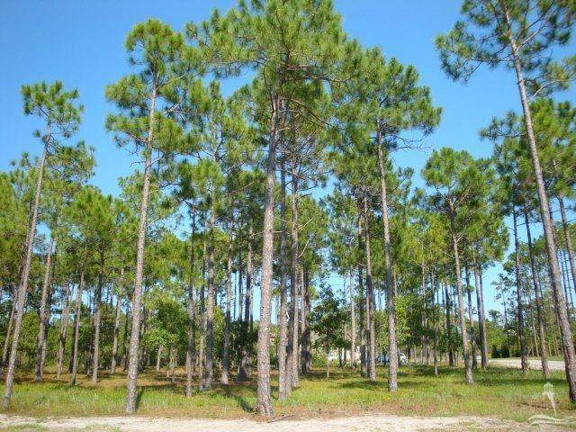 3883 Fairhaven Drive, Southport, NC 28461 (MLS #100204226) :: SC Beach Real Estate