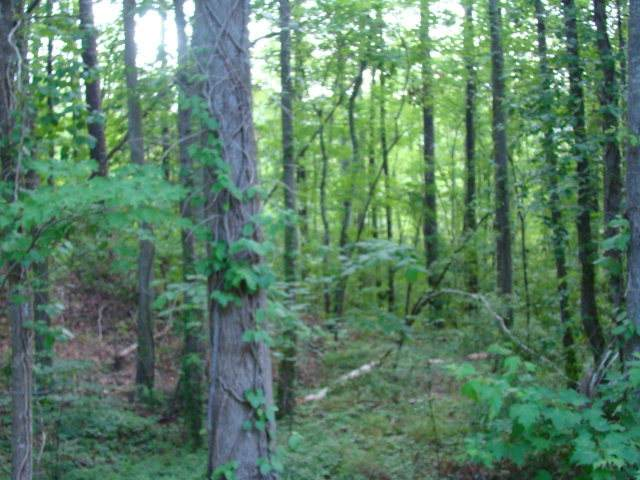 Lot 8 River Road, Blounts Creek, NC 27814 (MLS #100209537) :: Berkshire Hathaway HomeServices Hometown, REALTORS®