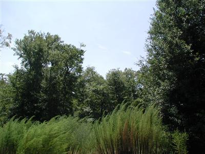 6139 River Sound Circle, Southport, NC 28461 (MLS #20666980) :: Century 21 Sweyer & Associates
