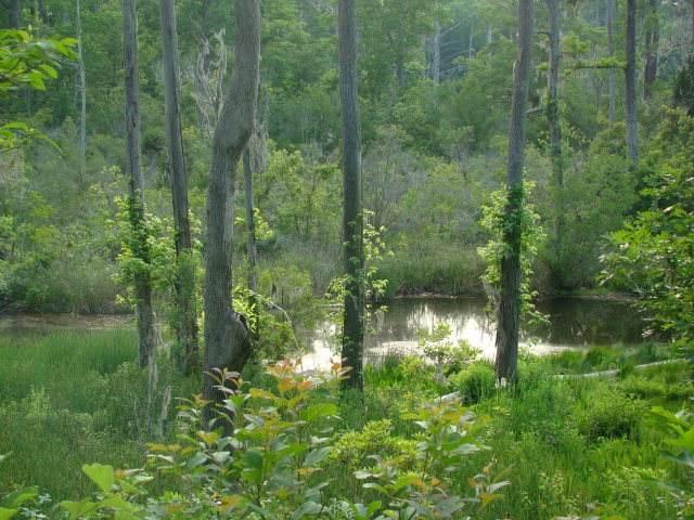 Lot 8 River Road, Blounts Creek, NC 27814 (MLS #100209537) :: The Legacy Team