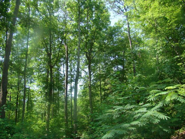 Lot 10 Birch Drive, Blounts Creek, NC 27814 (MLS #70026686) :: Frost Real Estate Team